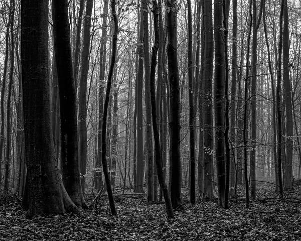 Late Autumn Walk Through the Sonian Forest No. 10, Belgium, 2019