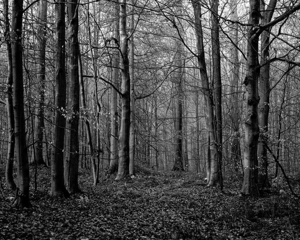 Late Autumn Walk Through the Sonian Forest No. 12, Belgium, 2019