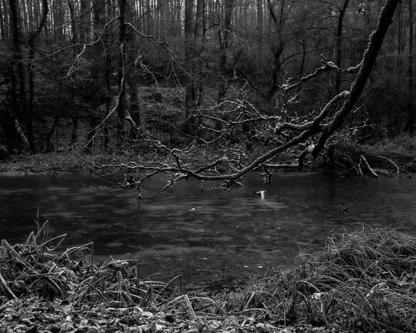 Late Autumn Walk Through the Sonian Forest No. 1, Belgium, 2019