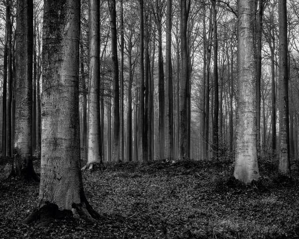 Late Autumn Walk Through the Sonian Forest No. 16, Belgium, 2019