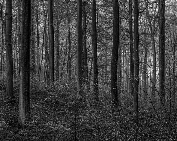 Late Autumn Walk Through the Sonian Forest No. 15, Belgium, 2019