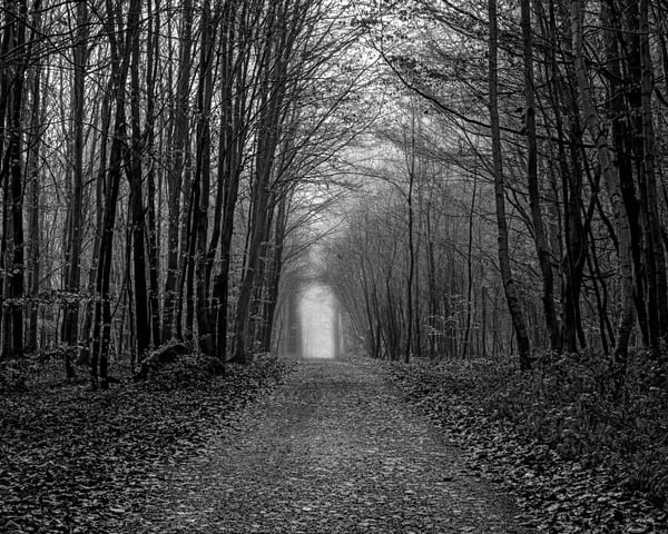 Late Autumn Walk Through the Sonian Forest No. 11, Belgium, 2019
