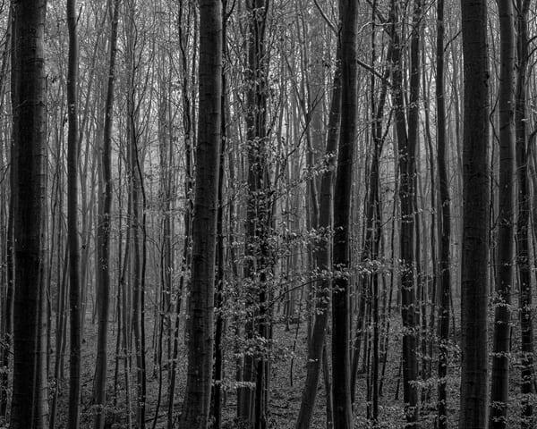 Late Autumn Walk Through the Sonian Forest No. 13, Belgium, 2019