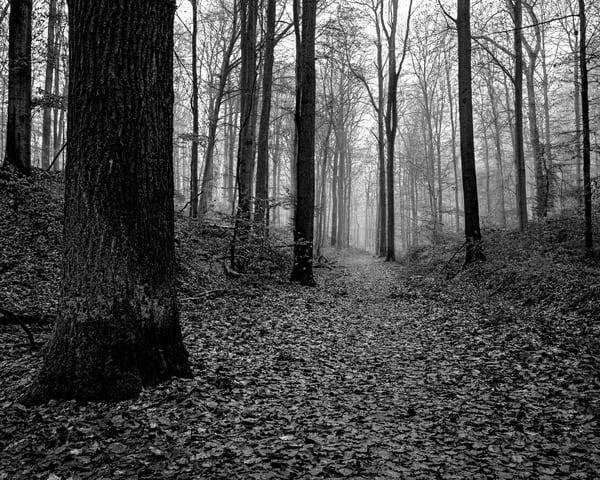 Late Autumn Walk Through the Sonian Forest No. 9, Belgium, 2019