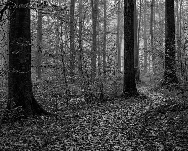 Late Autumn Walk Through the Sonian Forest No. 14, Belgium, 2019