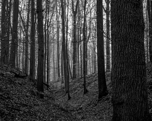 Late Autumn Walk Through the Sonian Forest No. 8, Belgium, 2019