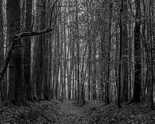 Late Autumn Walk Through the Sonian Forest No. 4, Belgium, 2019