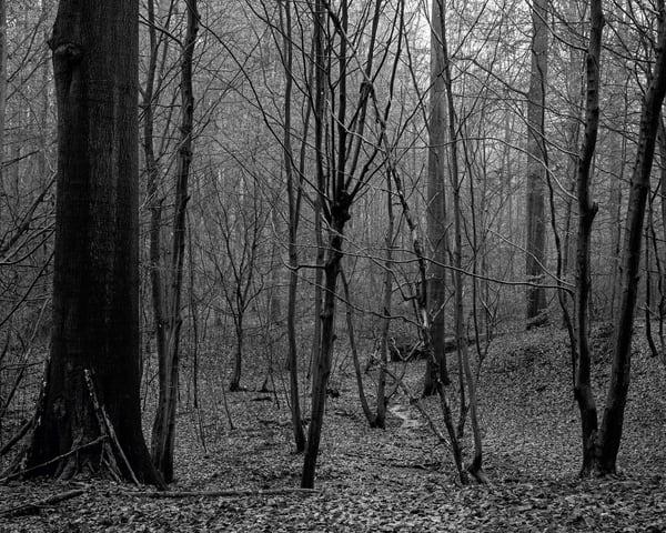 Late Autumn Walk Through the Sonian Forest No. 5, Belgium, 2019