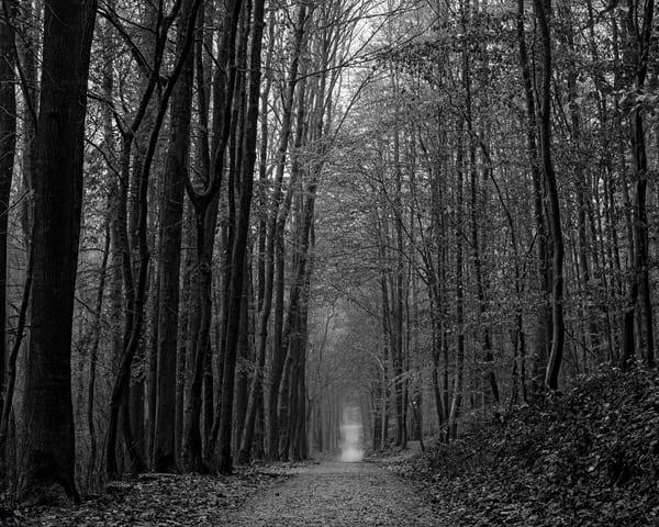 Late Autumn Walk Through the Sonian Forest No. 6, Belgium, 2019