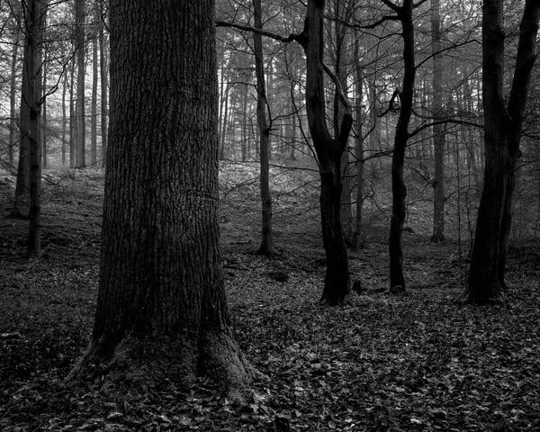 Late Autumn Walk Through the Sonian Forest No. 7, Belgium, 2019