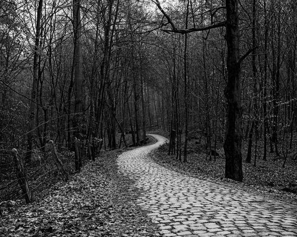 Late Autumn Walk Through the Sonian Forest No. 2, Belgium, 2019