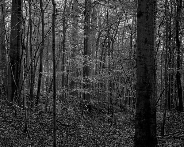 Late Autumn Walk Through the Sonian Forest No. 3, Belgium, 2019