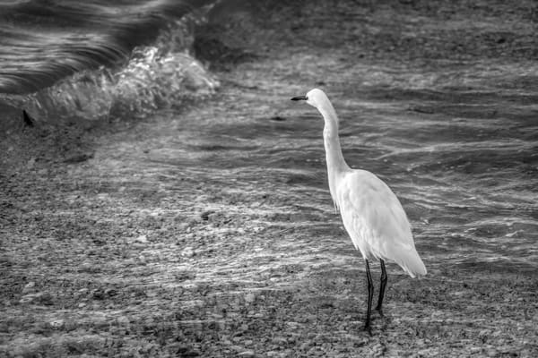 Beach Bird Photography Art | Paul J Godin Photography
