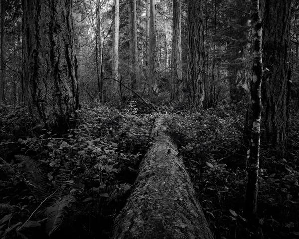 Fallen Tree, Kopachuck State Park, Washington, 2020