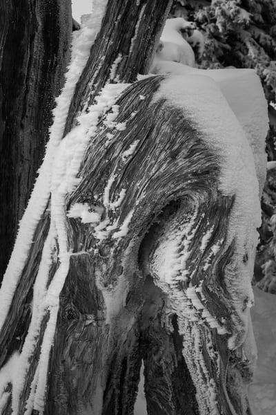 Frozen Stump, Hurricane Ridge, Washington, 2016