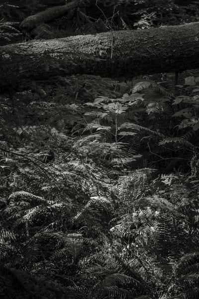 Highlights of the Forest No. 6, Greenwater, Washington, 2016