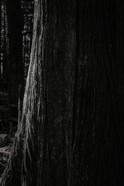 Highlights of the Forest No. 11, Greenwater, Washington, 2016