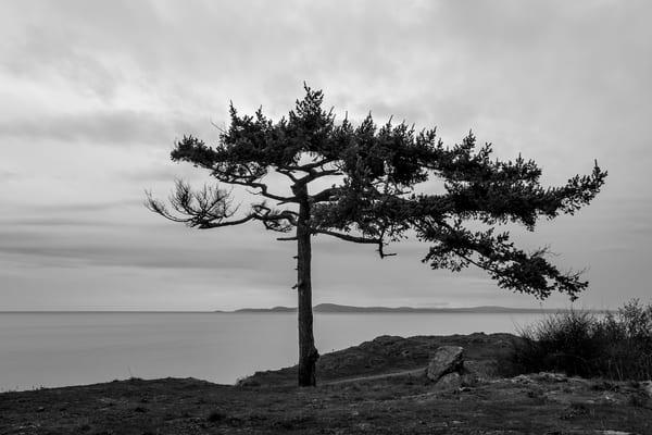 Lone Tree, Rosario Head, Deception Pass State Park, Washington, 2015