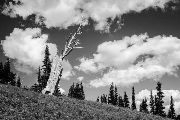 Silver Snag, Sunrise, Mount Rainier, Washington, 2016