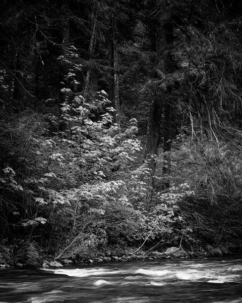 Northwest Forest, Gifford Pinchot National Forest, Washington, 2019