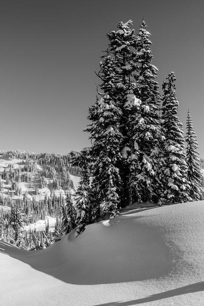 Snow Covered Trees, Paradise, Mount Rainier, Washington, 2017