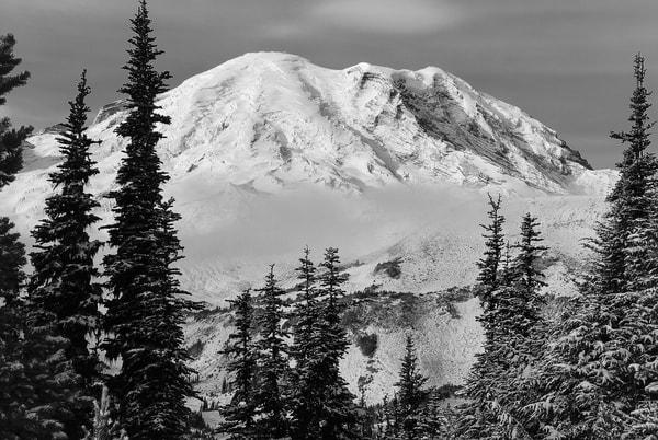 Mount Rainier Through the Alpine Forest, Washington, 2007