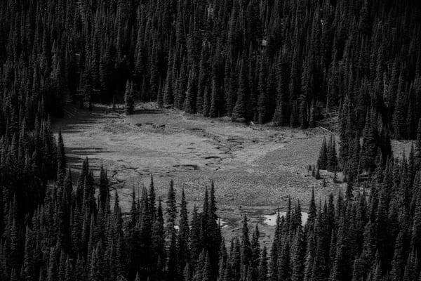Sunrise Creek Meadow, Washington, 2019