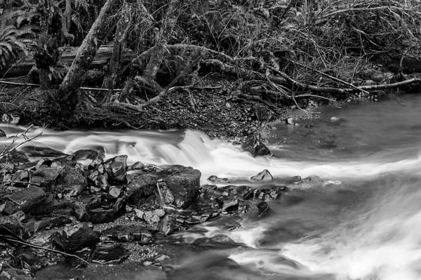 Cedar Creek, Capitol State Forest, Washington, 2015