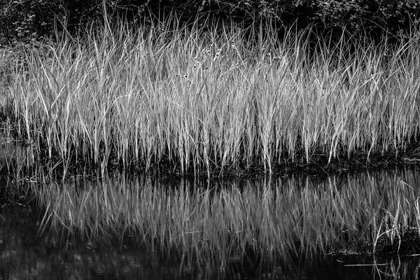 Bowman Bay Wetlands, Deception Pass State Park, Washington, 2016