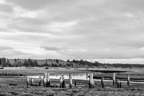 Campbell Slough at Low Tide, Grays Harbor County, Washington, 2017