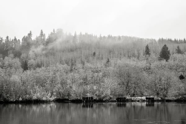 Forest Along the Chehalis River, Montesano, Washington, 2015