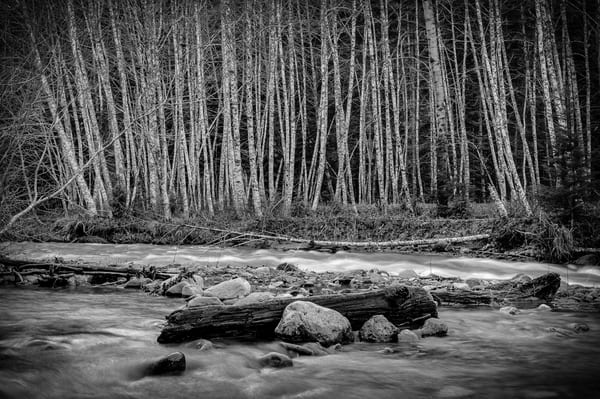 Forest Along Huckleberry Creek, Washington, 2014