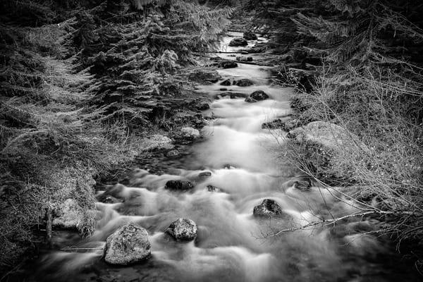 Huckleberry Creek, Washington, 2014