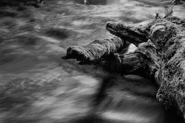 Lyre River No. 5, Olympic Peninsula, Washington, 2013