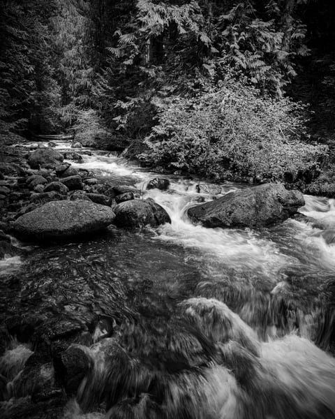 Forest Stream, Gifford Pinchot National Forest, Washington, 2019
