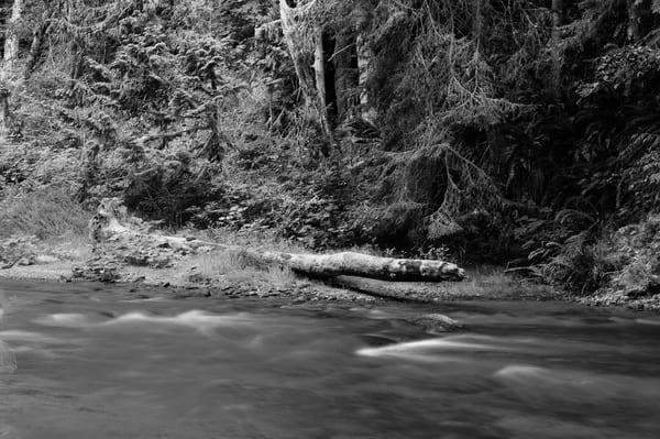 Lyre River No. 7, Olympic Peninsula, Washington, 2013