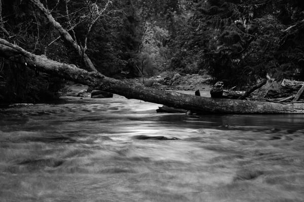Lyre River No. 4, Olympic Peninsula, Washington, 2013