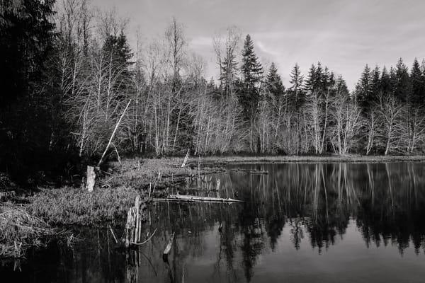 Shoreline, Lake West, Mason County, Washington, 2017