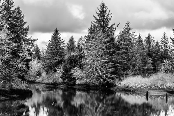 Slack Tide, Jessie Slough, Grays Harbor County, Washington, 2017