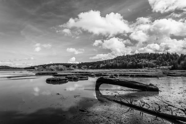 Sunny Winter Day on Oyster Bay No. 4, Thurston County, Washington, 2016