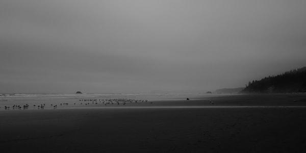 Kalaloch Beach, Washington, 2013