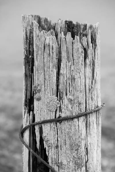 Old Piling, Ala Spit, Whidbey Island, Washington, 2015