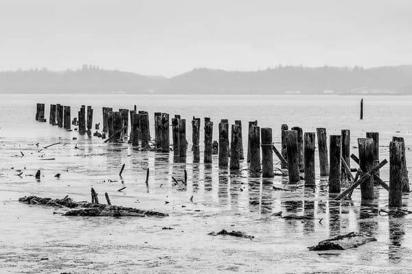 Pilings, Southshore, Grays Harbor, Washington, 2017