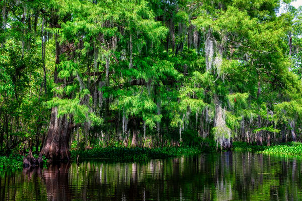 Along Tchackehou Bayou - Louisiana Swamps fine-art photography prints