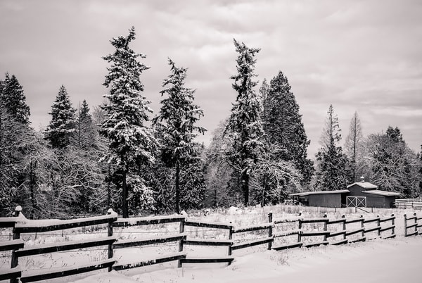 Edge of the Woods, Edgewood, Washington, 2008