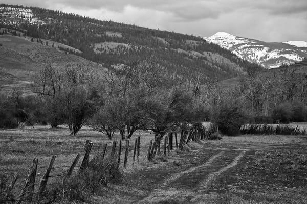 Double Track Through the Pasture, Kittitas County, Washington, 2011