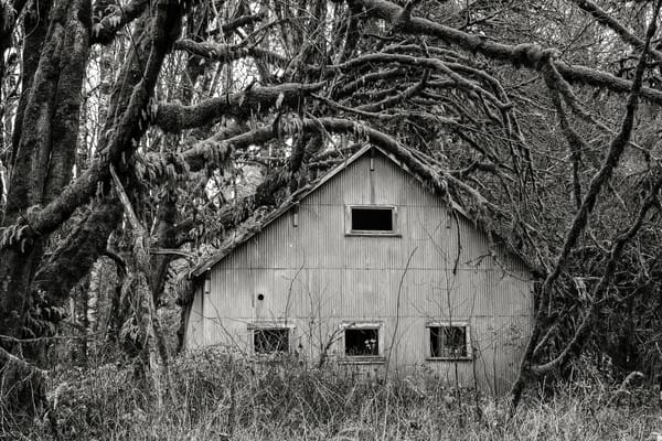 Old Metal Building in the Forest, Dryad, Washington, 2015