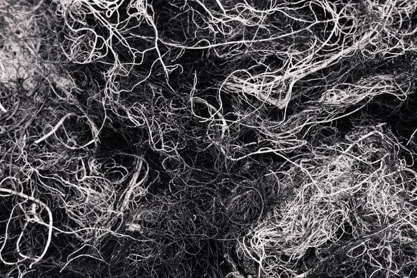 Alpine Lichen No. 3, Washington, 2014