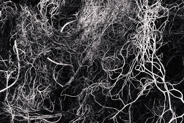 Alpine Lichen No. 1, Washington, 2014