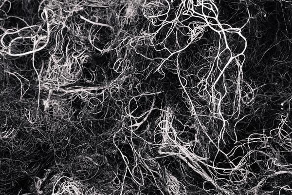 Alpine Lichen No. 2, Washington, 2014